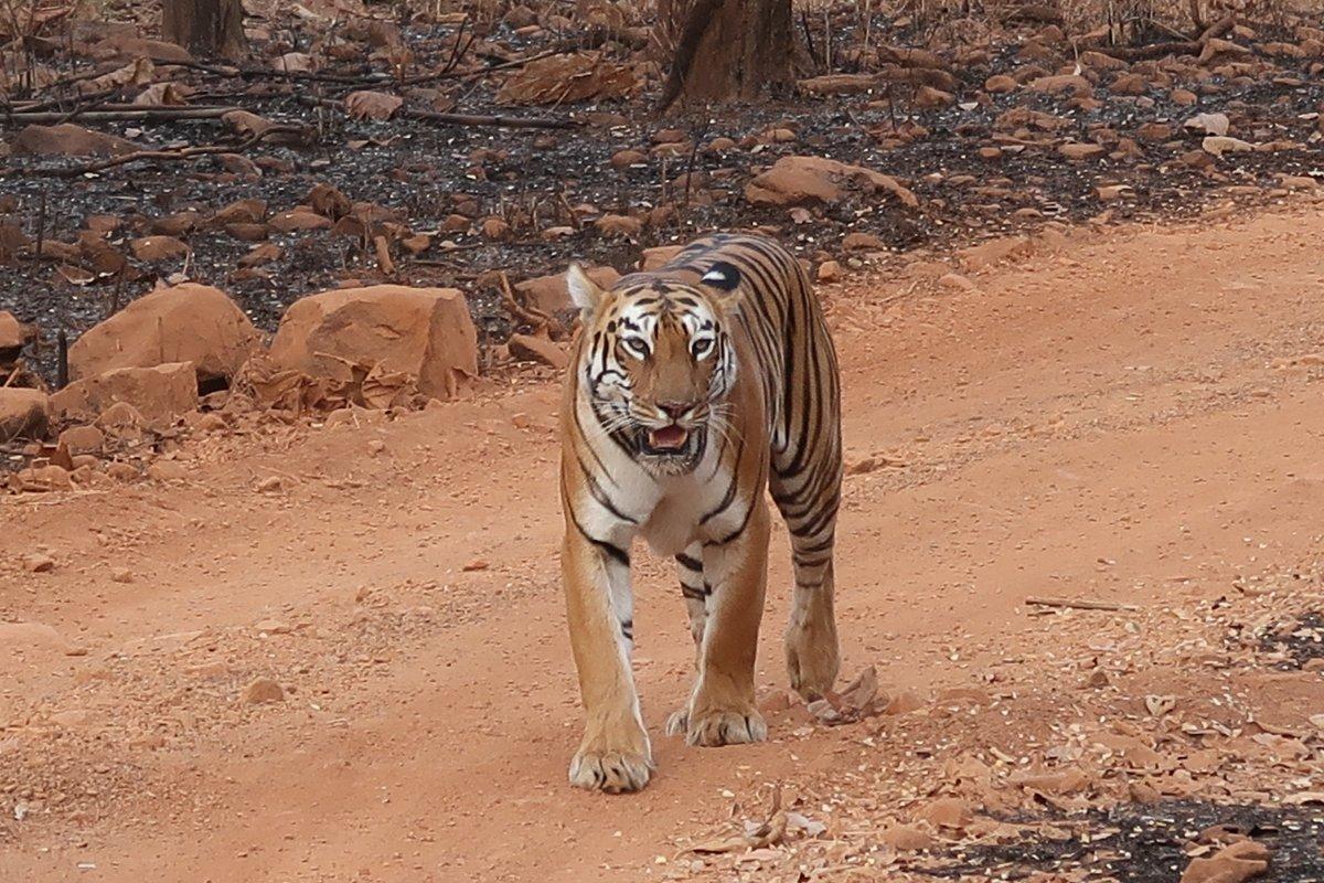 Za přírodou Indie