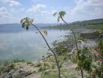 Galilejské jezero