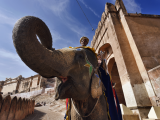 Rajasthan, Jaipur, the Amber Fort, elephant driver (Indie, Shutterstock)