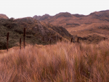 National park Cajas (Ekvádor, Dreamstime)