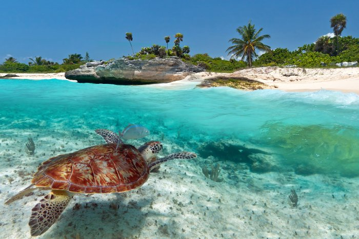 Kareta obrovská, Mayská riviéra (Mexiko, Shutterstock)