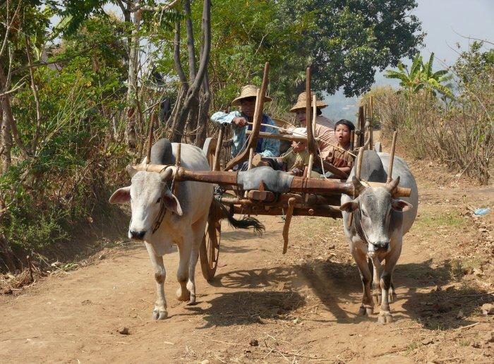 3)Tisíc jedna pagoda -F (Barma, Jaromír Červenka)