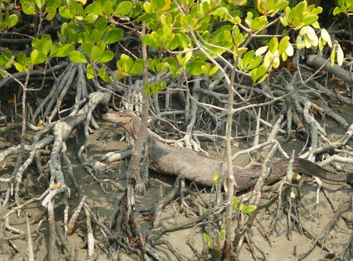 Neviditelní tygři Sundarbanu (2. část)